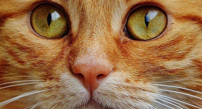 Qué pasa si miras a un gato a los ojos