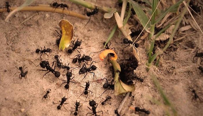 Cómo funciona un hormiguero
